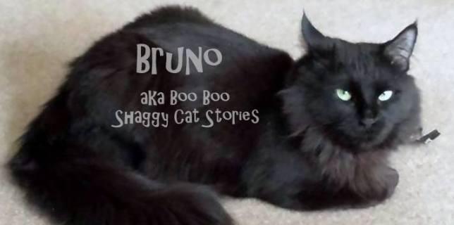 Bruno (aka Boo Boo)